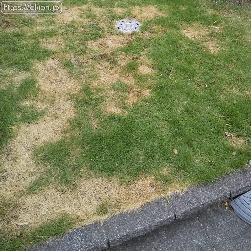 除草剤撒き過ぎ